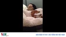 Video: Chú Chó Nhảy Lên Vui Sướng Khi Có Giường Mới