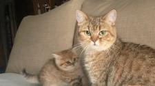 Video: Mèo Mẹ Dửng Dưng Khi Con Hào Hứng Biểu Diễn Kỹ Năng Săn Mồi