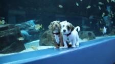 """Hai Chú Chó """"Bao Trọn"""" Công Viên Đại Dương Giữa Mùa Dịch Covid-19"""
