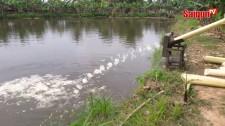 Máy xắt chuối siêu nhanh ở xứ dừa