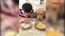 Cuộc thi ăn giữa chủ và chó