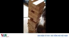 """Video: Bất Ngờ Trước Khả Năng Chơi Xếp Gỗ """"Cao Thủ"""" Của... Chú Mèo"""