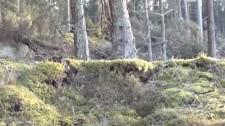 Video: Trái Đất Phập Phồng Như Quái Vật Đang Thở Phì Phò Từ Lòng Đất