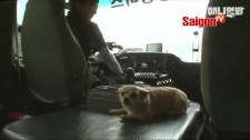 Chú cún tự biết bắt xe buýt để về nhà