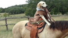 Chú Chó Cao Bồi Trổ Tài Cưỡi Ngựa Đáng Khâm Phục