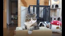 """Chú Mèo Không Thể Chui Ra Khỏi Chiếc Hộp """"Nhà"""" Vì… Quá Béo"""